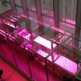 Hydroponic garden at MIT Media Lab